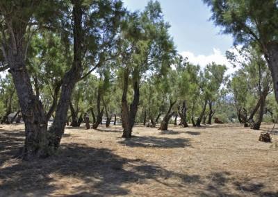 Område ude på klippehalvø Agii Apostoli 2015