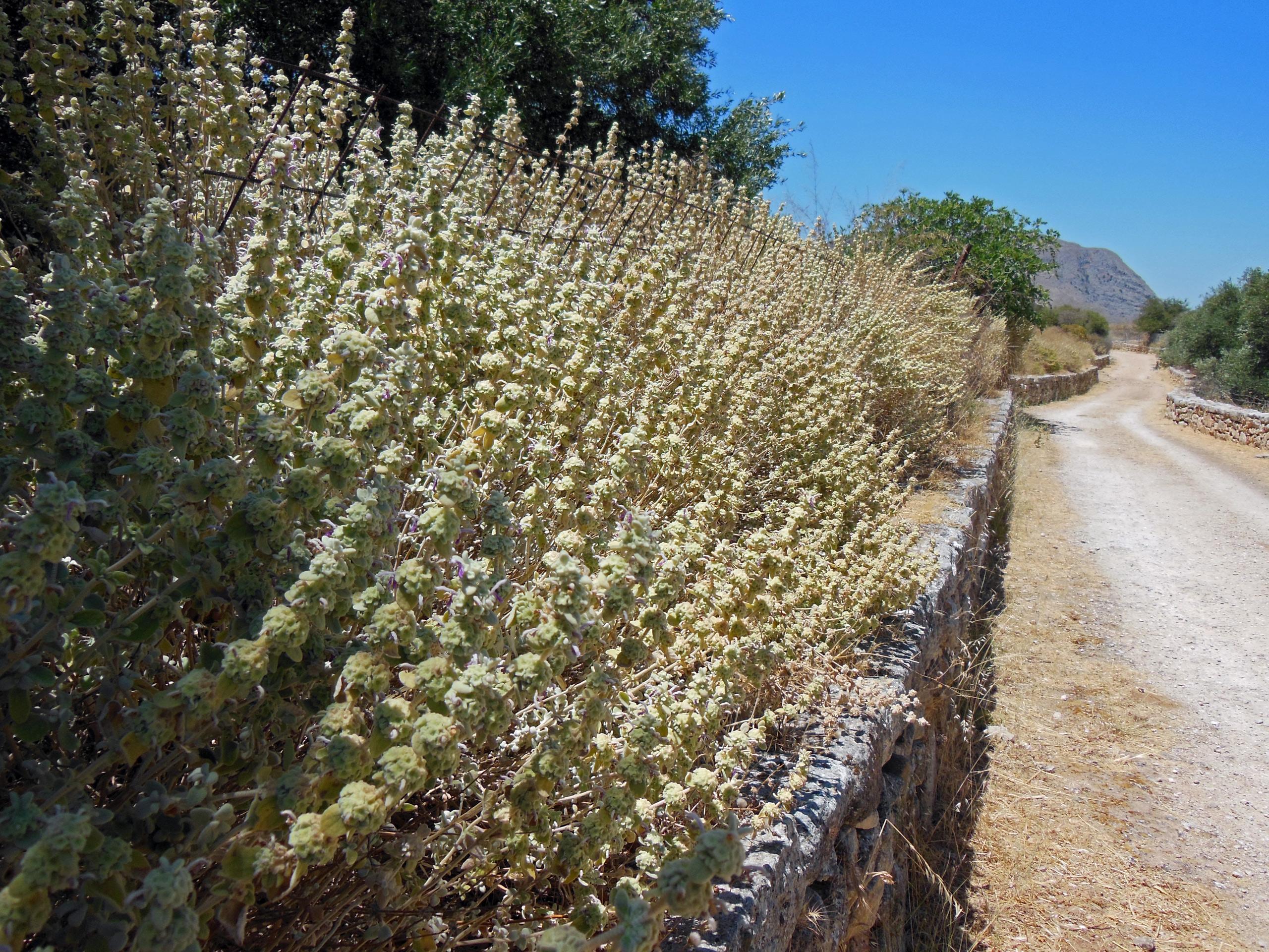 Kreta-29.06.12---13.07.12-380